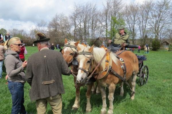 Pferdesegnung 2015