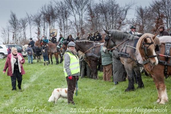 Pferdesegnung 2016