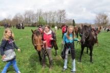 Pferdesegnung--0030