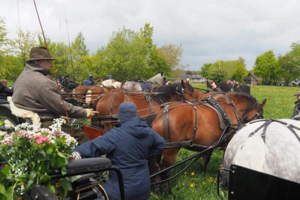 Pferdesegnung 2019